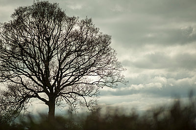 Single tree in winter against dramatic sky - p1433m1538867 by Wolf Kettler
