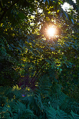 Abendstimmung im Wald - p900m1091351 von Michael Moser