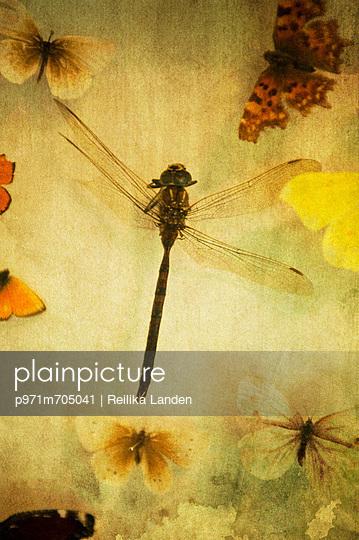 Poetic - p971m705041 by Reilika Landen