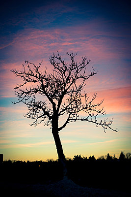 Sonnenuntergang - p829m949339 von Régis Domergue