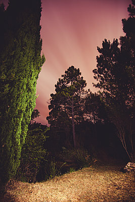 Clearing in the forest at night - p1598m2164416 by zweiff Florian Bier