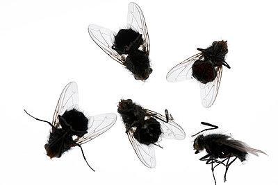 Tote Fliegen - p4010607 von Frank Baquet