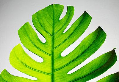 the leaf - p5676766 by Greg Conraux