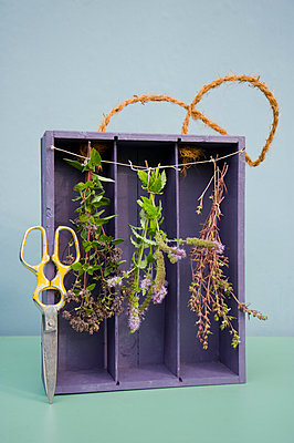 Drying spices in old case of vine, oregano, pepper mint and savory, pruner - p300m2041967 von Gianna Schade