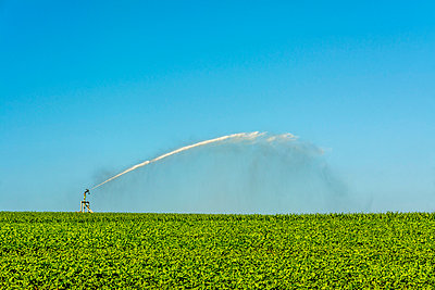Watering in a field of sunflowers. Auvergne. France. - p813m1462128 by B.Jaubert