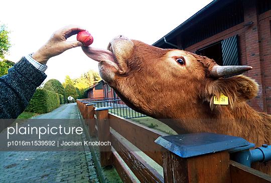 Ochsenzunge - p1016m1539592 von Jochen Knobloch