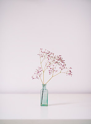Blume in Vase - p1190m1120388 von Sarah Eick