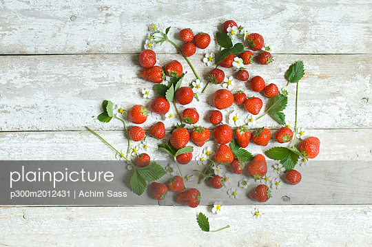 Strawberries, blossoms and leaves on white wood - p300m2012431 von Achim Sass