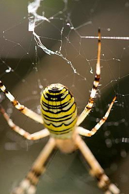 Spinnende Spinne - p6120185 von Pierre c.