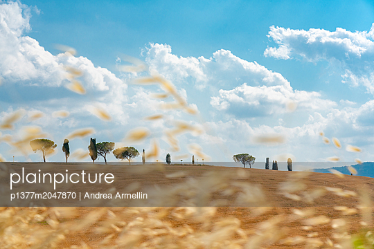 p1377m2047870 von Andrea Armellin