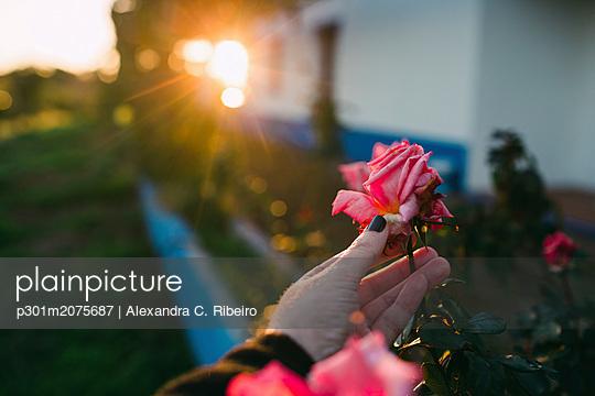 p301m2075687 von Alexandra C. Ribeiro