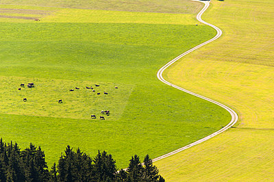Meadows and pasture - p1079m891099 by Ulrich Mertens