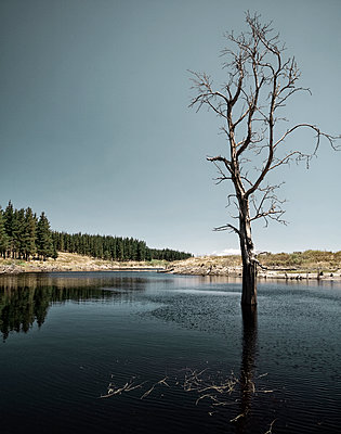 Dead tree on the lakefront - p1092m2054246 by Rolf Driesen