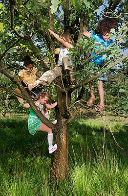 Kids play in the woods - p1132m1152748 by Mischa Keijser