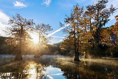 USA, Texas, Louisiana, Caddo Lake, Benton Lake, bald cypress forest - p300m1449453 by Fotofeeling