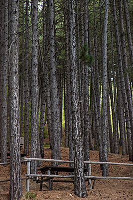 Picnic in the forest - p1291m1548057 by Marcus Bastel