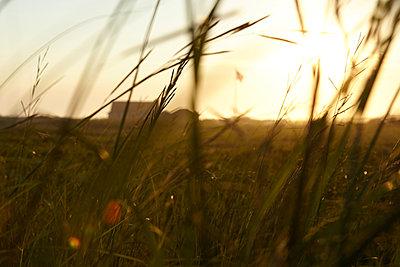 Field of grass - p1446m1515126 by annaazarov