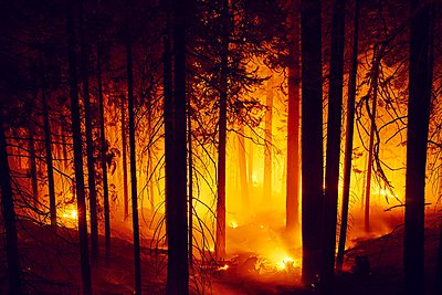 Forest fire, Yosemite National Park, California, USA - p429m1029694 by Gu