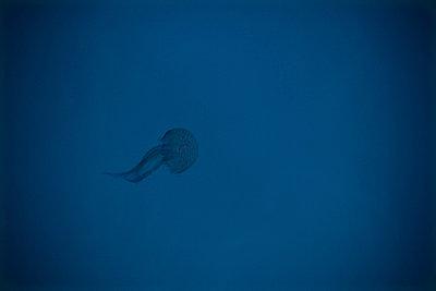Jellyfish - p993m698533 by Sara Foerster