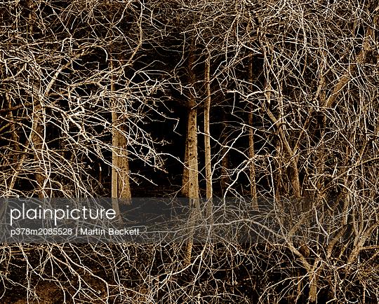 Twig - p378m2085528 by Martin Beckett