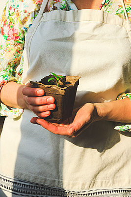 A girl holds in her hands a small sprout in a pot, which she has grown in her home garden - p1166m2269233 by Cavan Images
