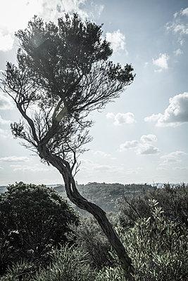 Wind bent tree - p1170m1044335 by Bjanka Kadic