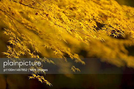 p1100m1497852 von Mint Images