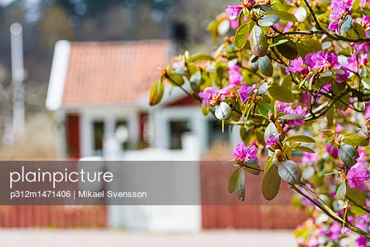 p312m1471406 von Mikael Svensson