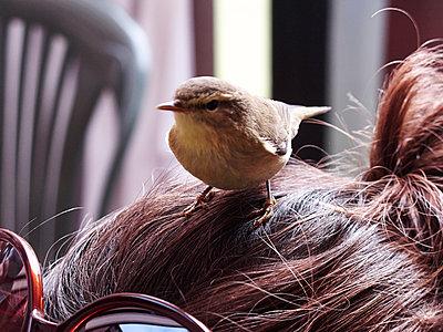 Little bird on female hair - p1499m2013474 by Marion Barat