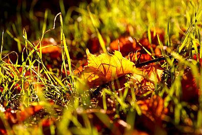 Herbstbeginn,Sachsen,Germany - p300m2144078 von Thomas Jäger