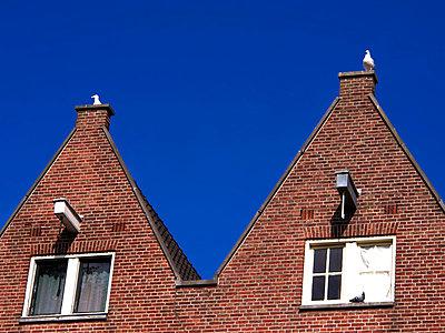 Traditional dutch house - p813m948609 by B.Jaubert