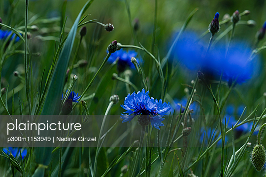 p300m1153949 von Nadine Ginzel