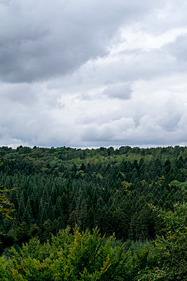 Forest - p1228m1465510 by Benjamin Harte