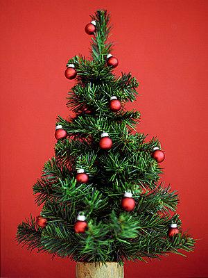 Weihnachtsbaum mit Christbaumkugeln - p4470234 von Anja Lubitz