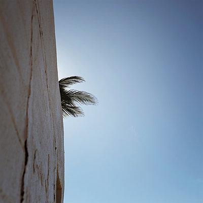 Palm leaf behind stone wall - p1105m1497200 by Virginie Plauchut