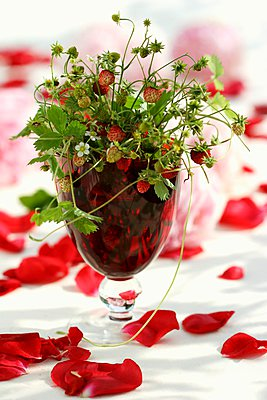 Posy of wild strawberries in a glass - p1183m996313 by Schindler, Martina