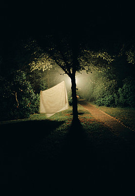 A sheet hanging from a tree at night - p3016395f by Emily Keegin