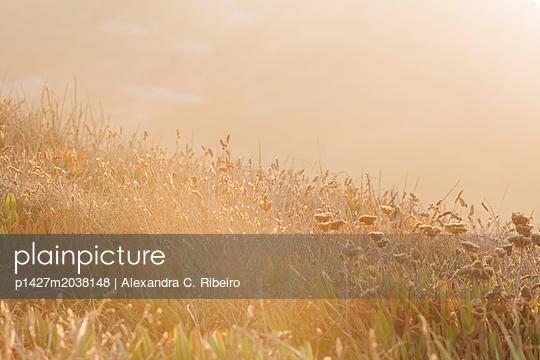 p1427m2038148 von Alexandra C. Ribeiro