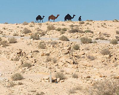 Kamelfiguren in der Wüste Negev - p1542m2203503 von Roger Grasas