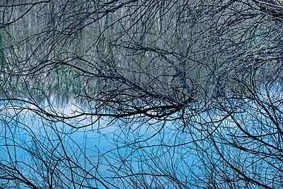 Tangled branches in pond, Minnesota - p884m1356765 by Jim Brandenburg