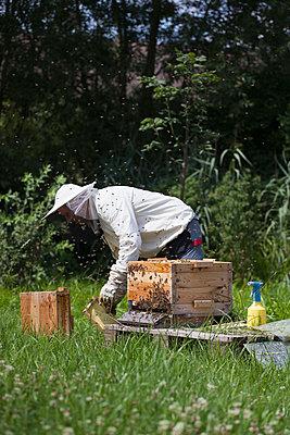 Male beekeeper working on bee hives at farm - p301m1070130f by Halfdark