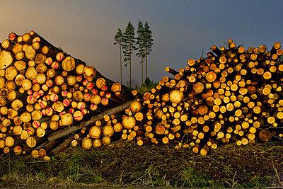 Finland, Heinola, Pile of spruce trees - p352m1079616f by Lauri Rotko