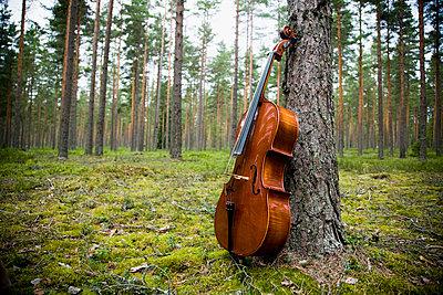 Cello in the forest - p4264898f by Tuomas Marttila