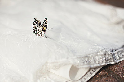 Close up of butterfly on wedding dress - p555m1408912 by Shestock