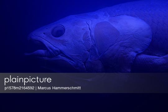 Urtier - p1578m2164592 von Marcus Hammerschmitt