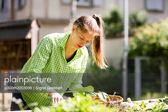 Young woman haevesting in urban garden - p300m2203096 by Sigrid Gombert