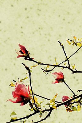 Flourish - p450m1119364 by Hanka Steidle