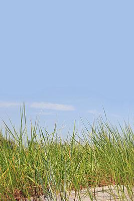 Marram grass - p450m949399 by Hanka Steidle