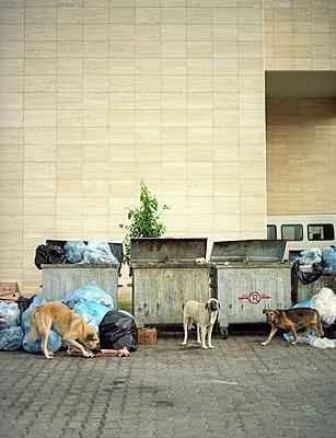 Abgemagerte Hunde - p8190006 von Kniel Mess