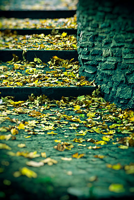 Stone stairs covered with fallen autumn leaves - p965m1465226 by VCreative